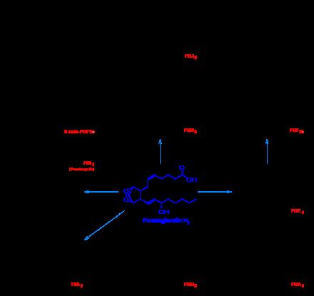 Prostanoid_synthesis