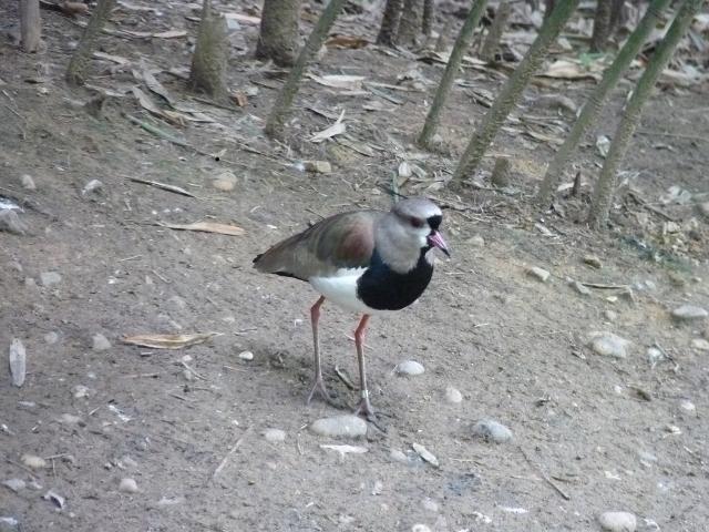 Un ornithologue, pour me donner le nom de cet oiseau ?