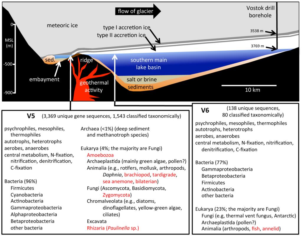 Les deux prélèvements V5 et V6 avec les lieux du lac auxquels ils correspondent, et les espèces qui y ont été découvertes. En rouge les espèces pressenties par la présence de bactéries dépendantes. Tout à droite, le lieu de forage, très éloigné des sources hydrothermales supposées, et des zones V5 et V6