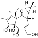le (+)-ingénol. Une structure complexe, surtout avec la partie droite de la molécule, où 4 cycles (dont deux à 7 carbones) sont imbriqués