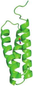 La protéine SUP (en vert) avec au centre, l'ion uranyle (atome d'uranium en bleu, oxygènes en rouge)
