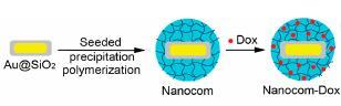 En jaune, la nanoparticule d'or sur silice, en bleu, le polymère, et en rouge, la doxorubicine (source)