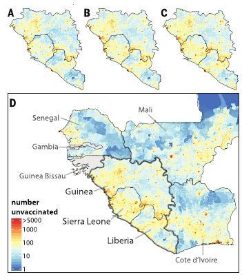 A : situation avant Ebola B à D : situation prédite par les auteurs après 6, 12, et 18 mois d'interruption des campagnes de vaccination