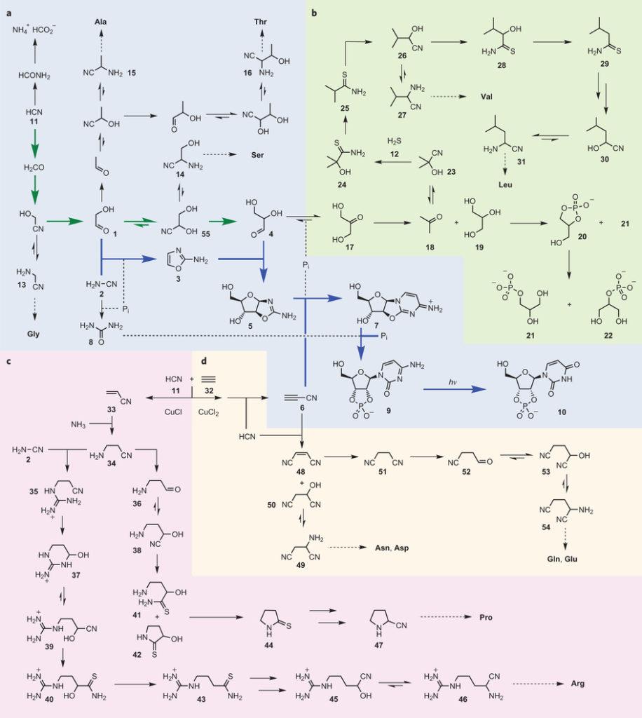A partir du composé 11, l'acide cyanhydrique, on obtient... Tout le reste (source : ref (2))