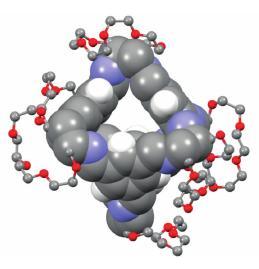 La molécule cage, qui tire sa rigidité permettant la porosité permanente de sa géométrie : un gros tétraèdre en gris/bleu/blanc, décoré par des éther couronnes en gris/rouge